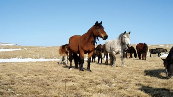 Excursion Photo Safari – Wild Horses