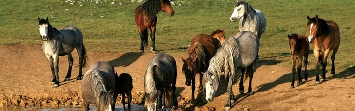 Reveal Livno's natural beauty and experience wild horses upfront